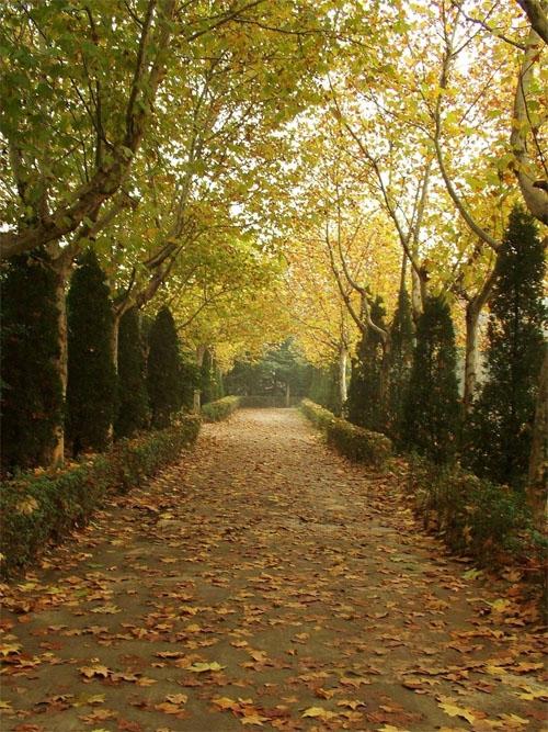 秋天的法国梧桐