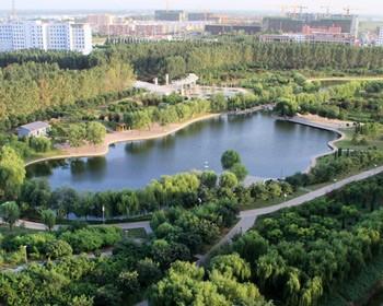 曲周县——中国甜玉米之乡