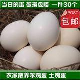环县土特产 农家土鸡蛋柴鸡蛋婴幼儿孕妇食用