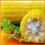 禾久甜糯玉米棒子张家口万全特产常温存放真空包装鲜食糯玉米